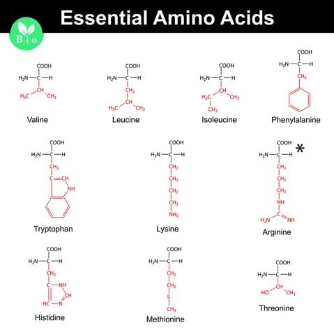 Aminosäure erklärt