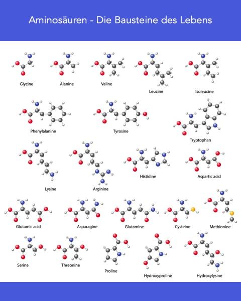 Welche Aminosäure hilft am meisten in den Wechseljahren?