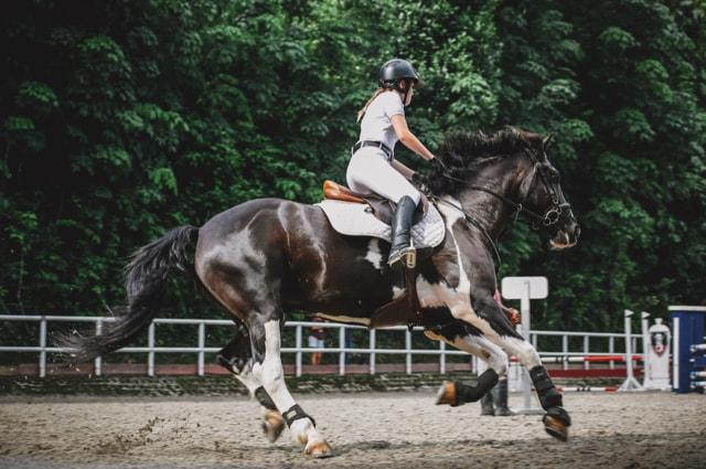 Nahrungsergänzung Mit Aminosäuren Bei Pferden