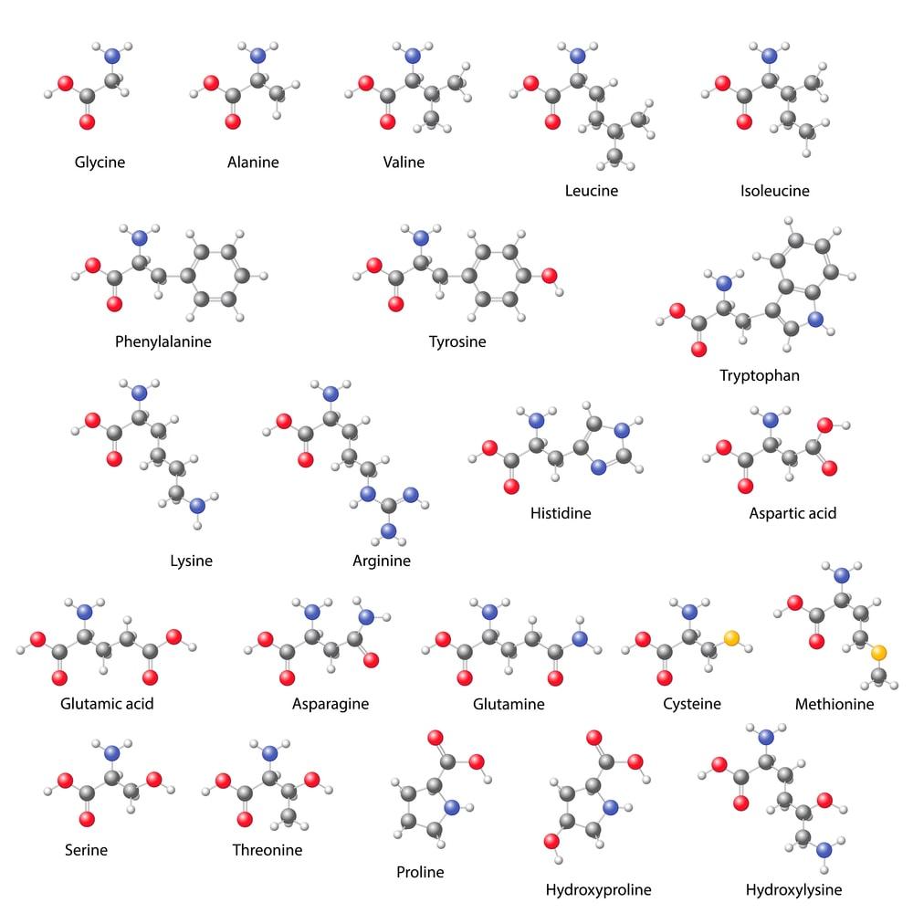 Essentielle Aminosäuren sind wichtig für die Gesundheit