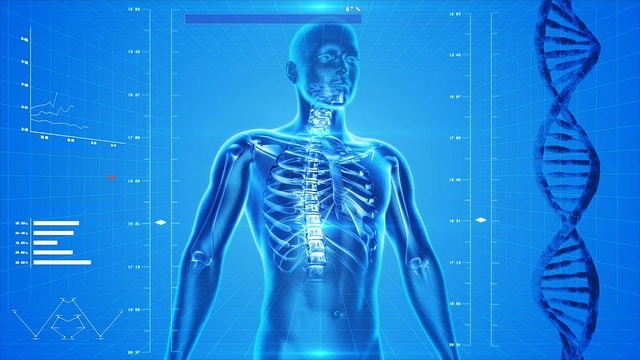 Wie Wirken Aminosäuren Im Menschlichen Körper