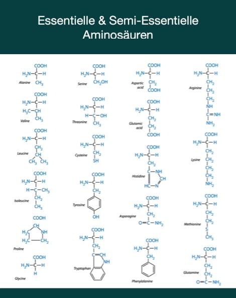 Semi essentielle Aminosäuren im Vergleich zu essentiellen