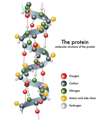 Struktur der Eiweißbausteine