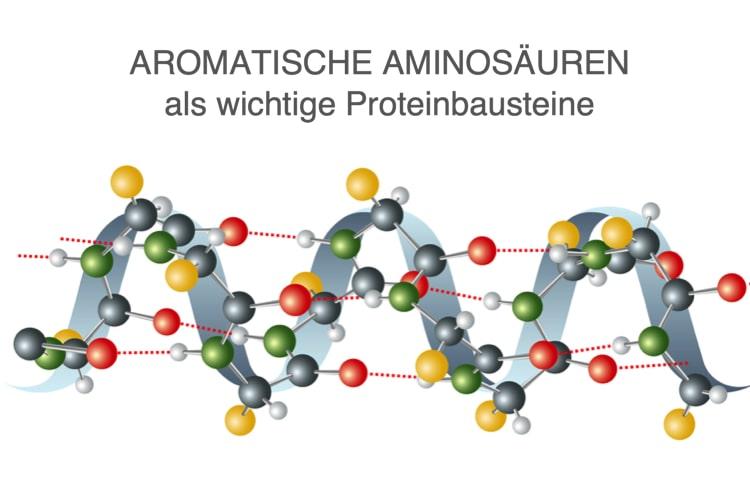 Aromatische Aminosäuren – Beschreibung Und Wirkung Der Eiweißbausteine