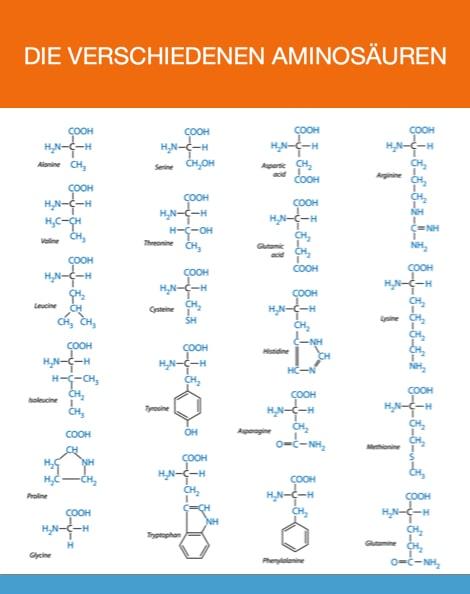 Was sind nichtessentielle Aminosäuren