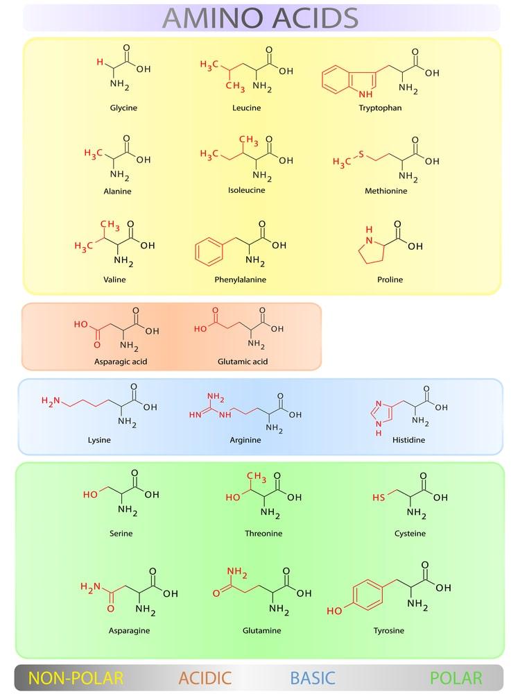 Übersicht Aminosäuren