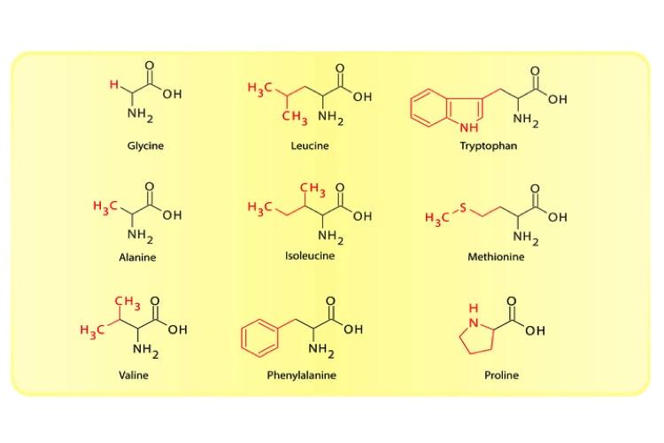 Vorteile Von Natürlichen Aminosäuren