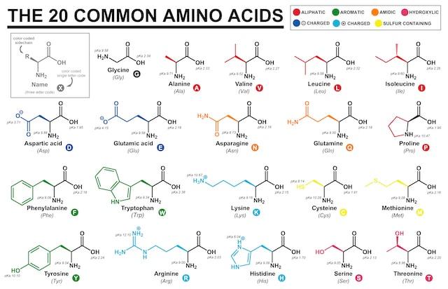 Saure, basische und weitere Aminos