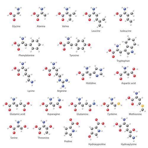 Proteinbausteine gegen Depressionen