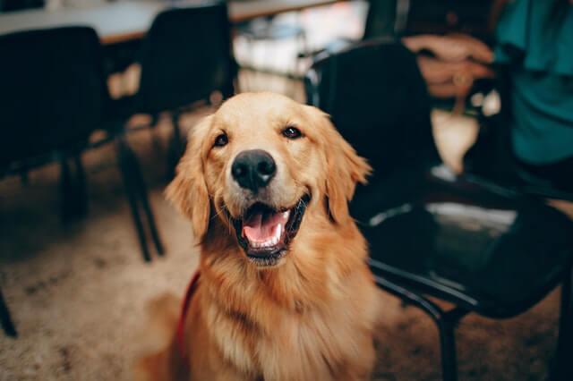 Muskelaufbau Für Hunde