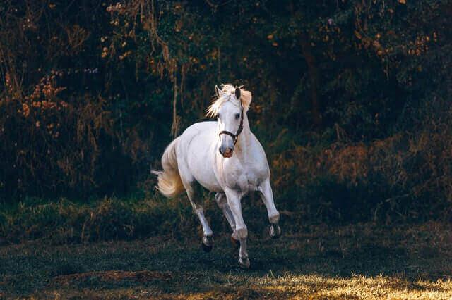 Gesundheit und Wohlbefinden für Pferde mit gesunden Muskeln
