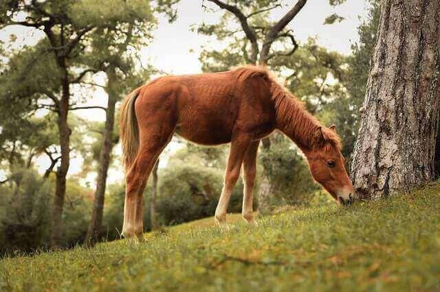 Abwechslung zwischen Trainingseinheiten und Ruhephasen des Pferdes