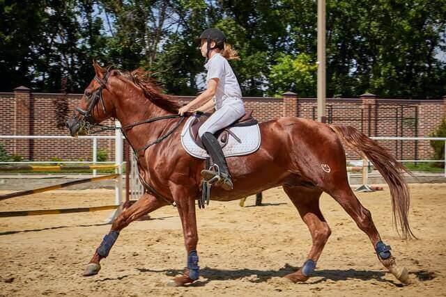 Die Dynamik der Muskeln bei Pferden