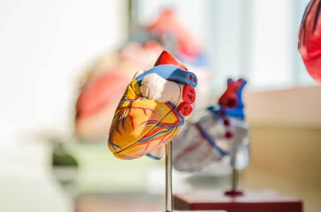 Sport mindert das Herzinfarktrisiko